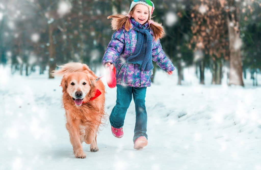 If you are looking for a family-centered, playful, and cheerful dog; look no further than the Golden Retriever!