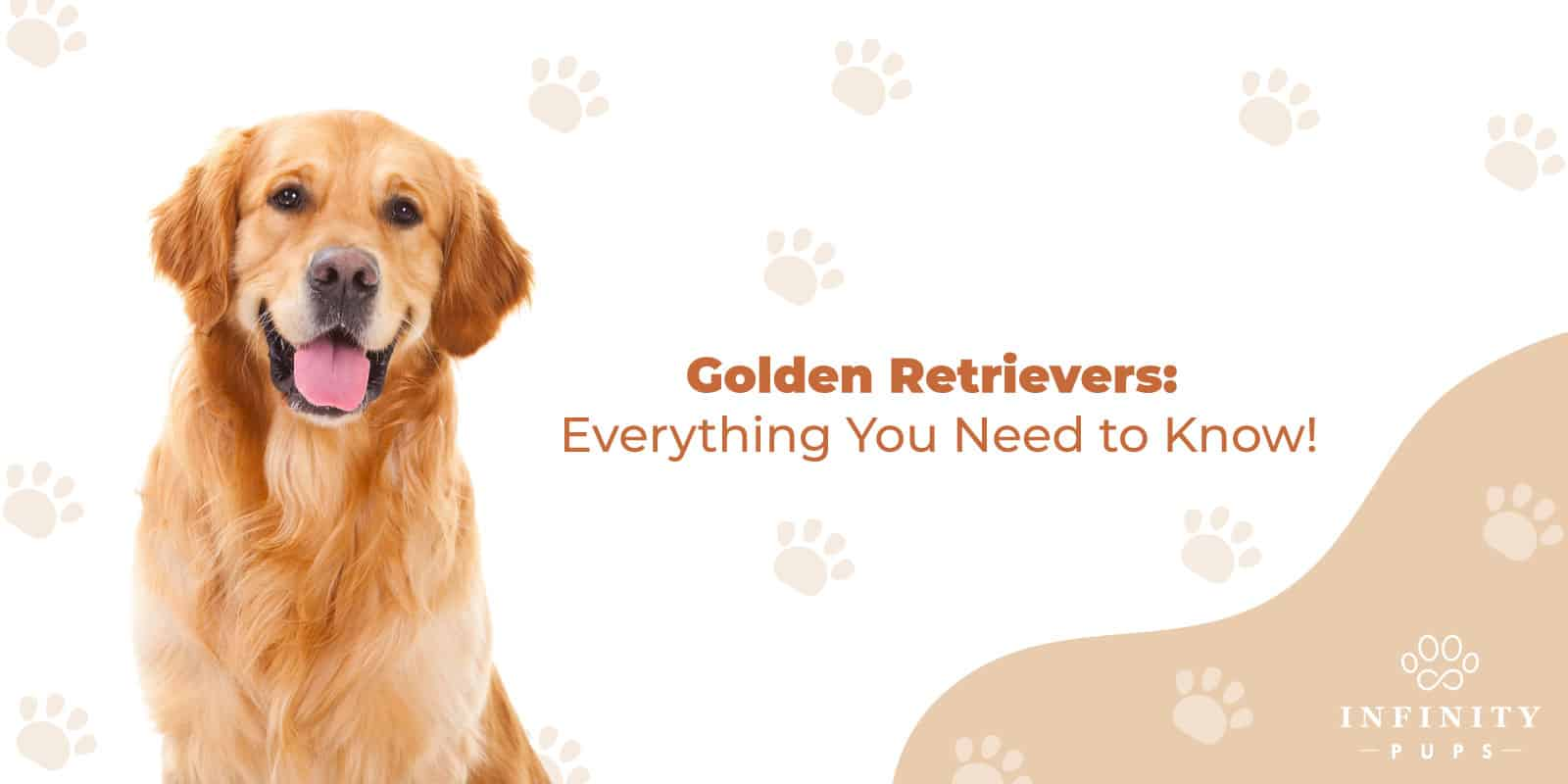 Golden Retrievers:  Everything You Need to Know! 1