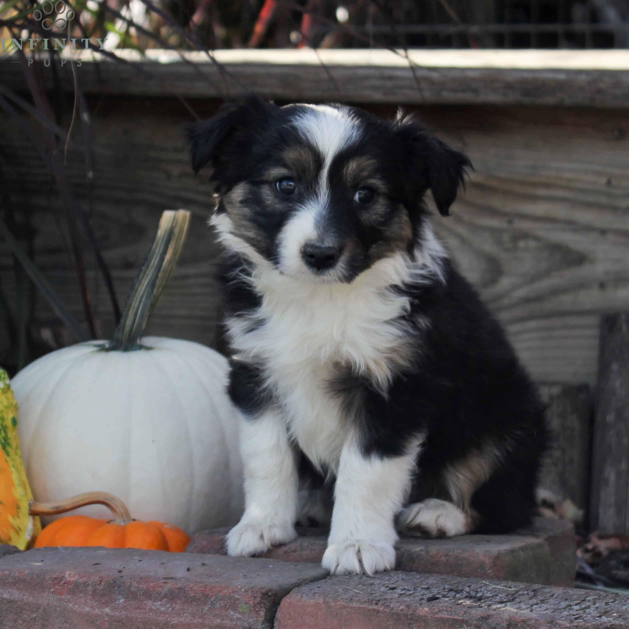 Becca-Female (16)