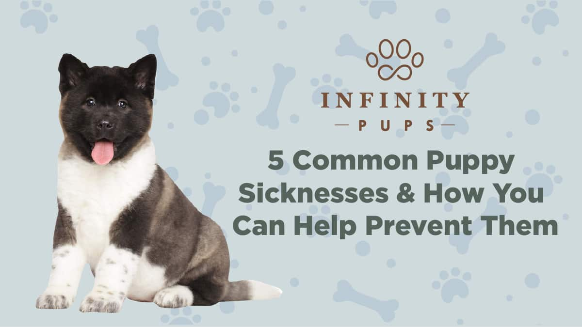5 Common Puppy Sicknesses & How You Can Help Prevent Them 1