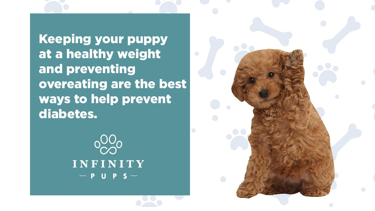 keepingyourpuppyatahealthyweight