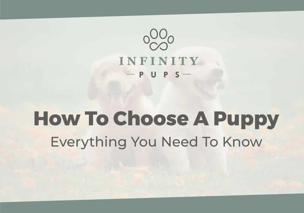 How To Choose A Puppy - Everything You Need To Know 3