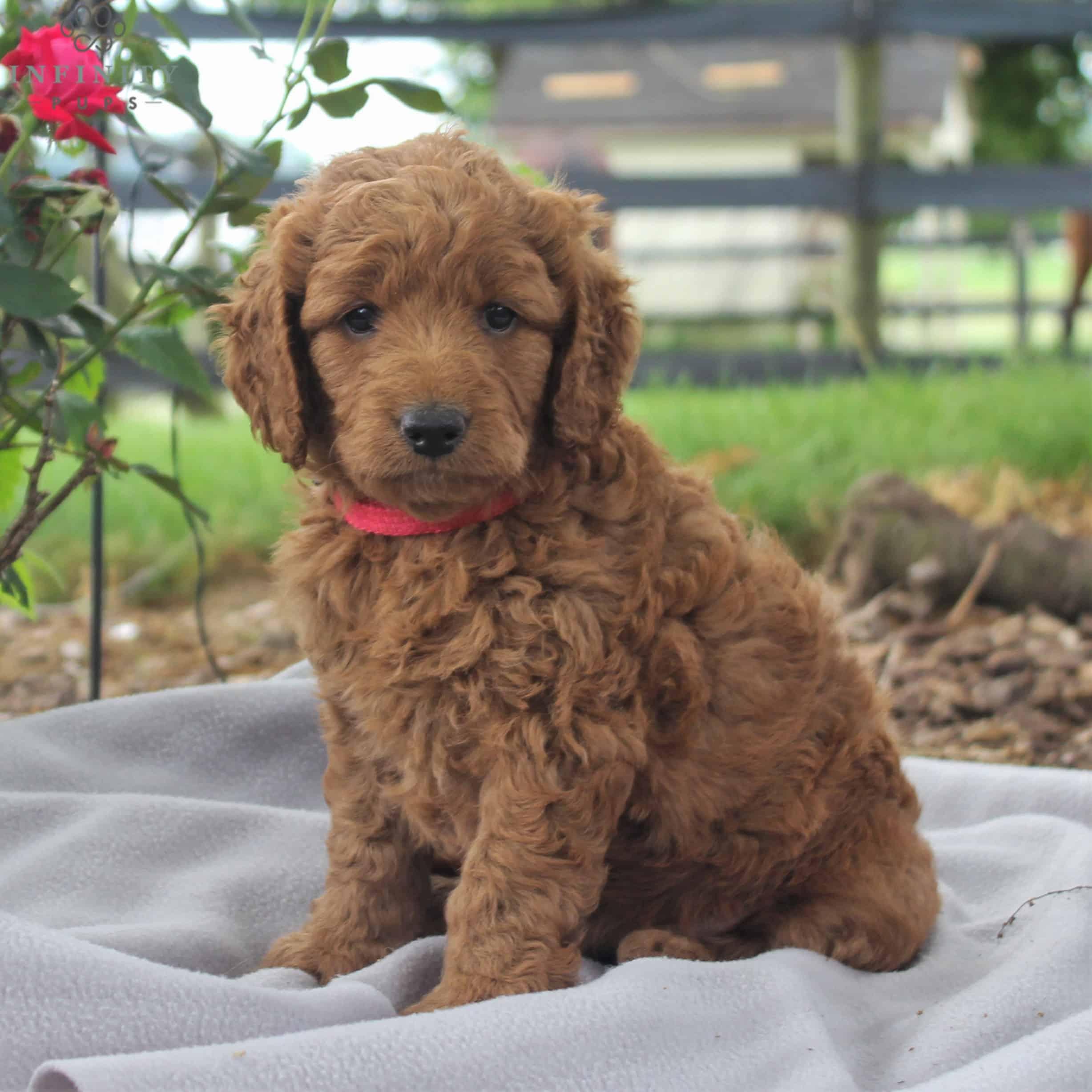 Rosie-Female (19)