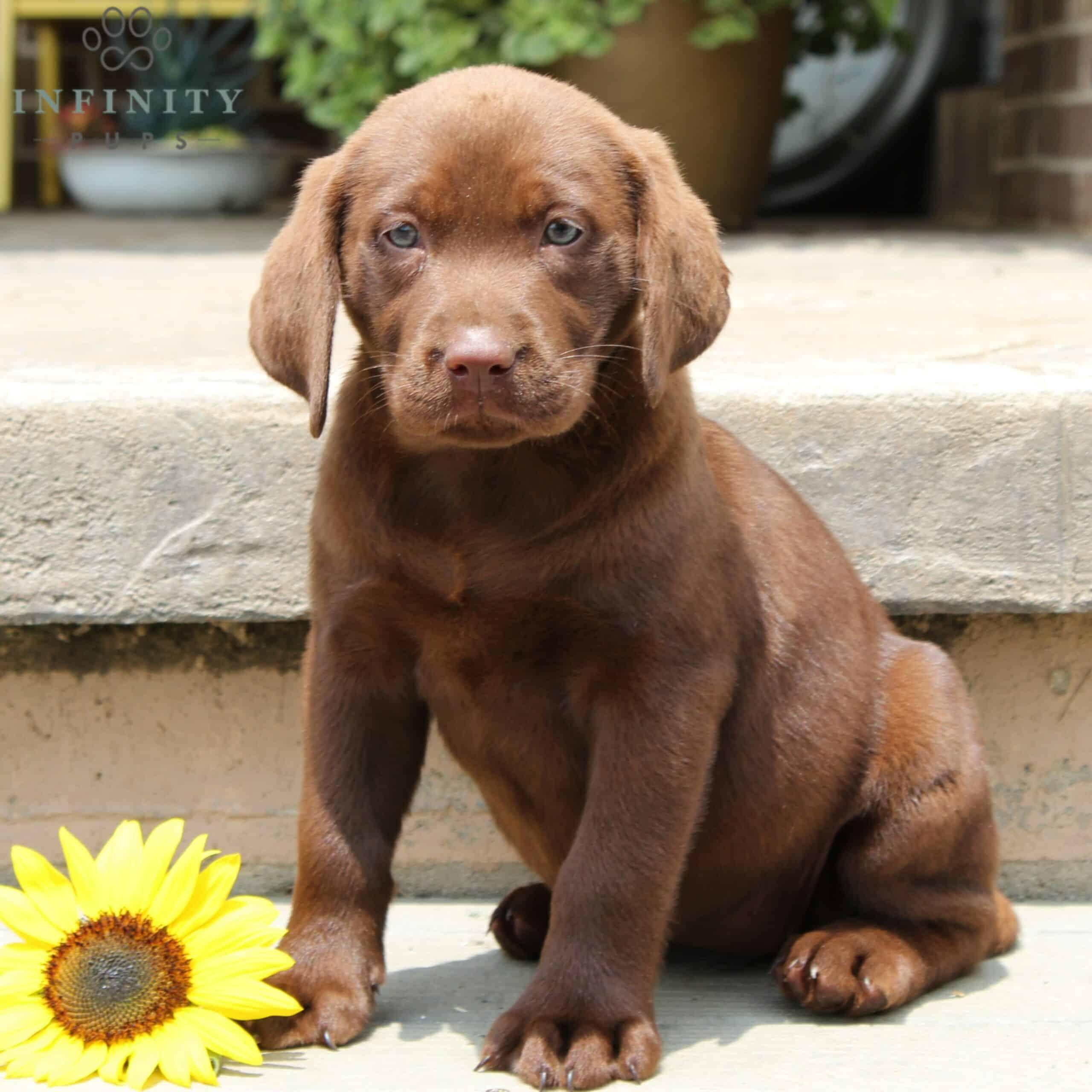 Ruth - ACA • Infinity Pups