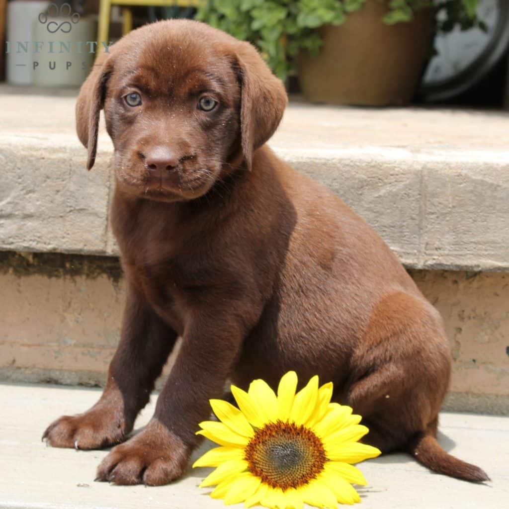 Milo - ACA • Infinity Pups