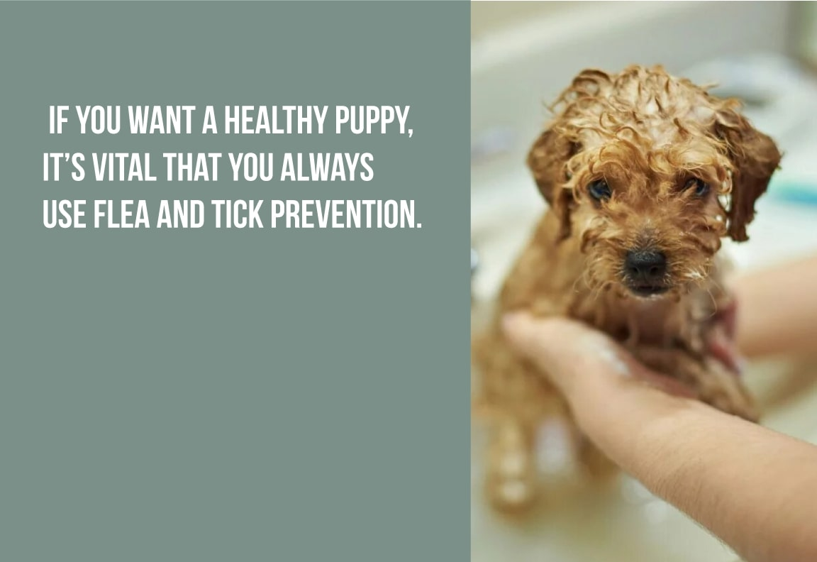 if you want a healthy puppy it's vital