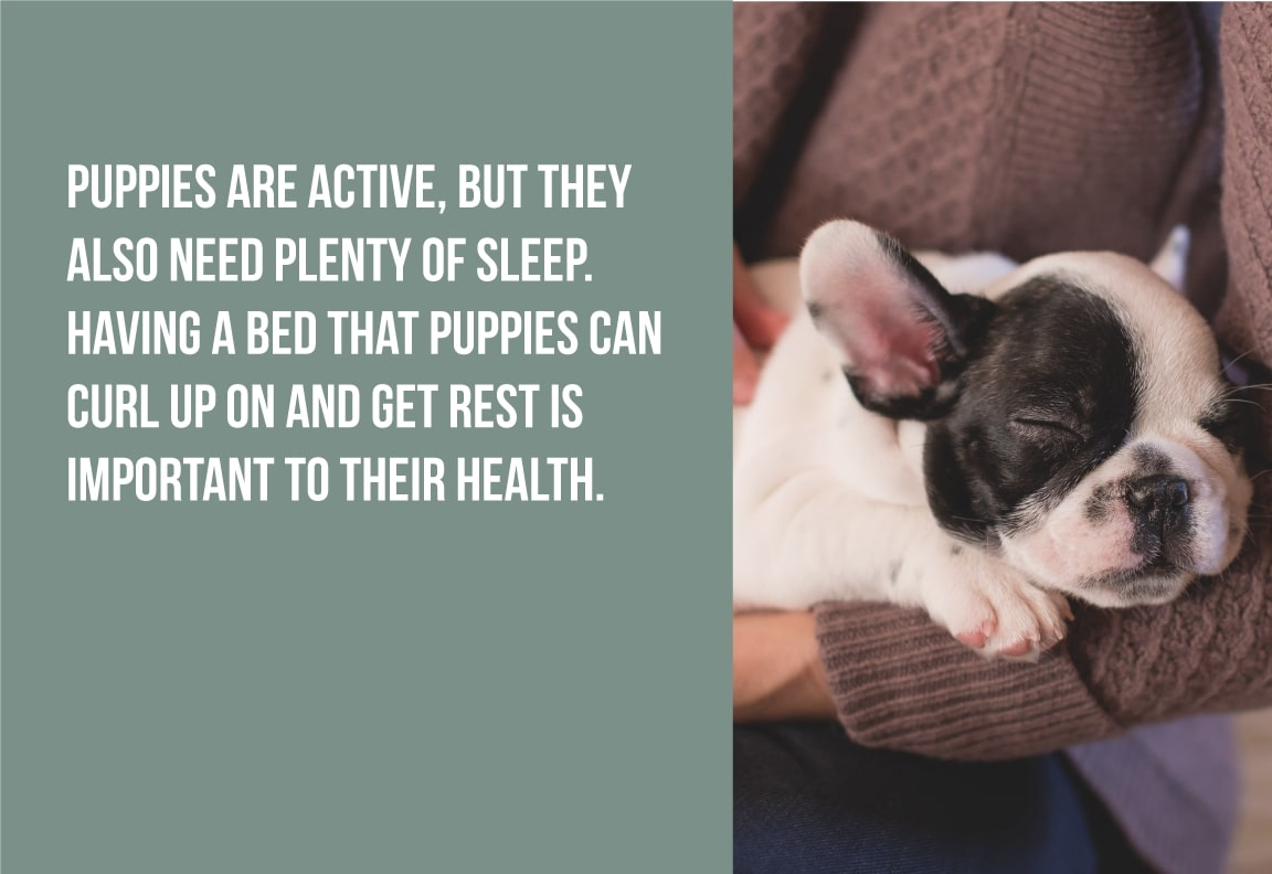 puppies are active, but they also