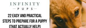 22 Easy Steps To Prepare For A Puppy (That Actually Help) 1