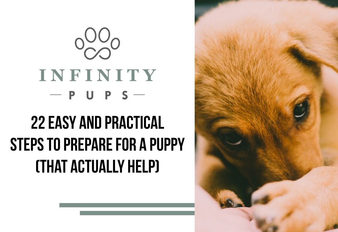22 Easy Steps To Prepare For A Puppy (That Actually Help) 2