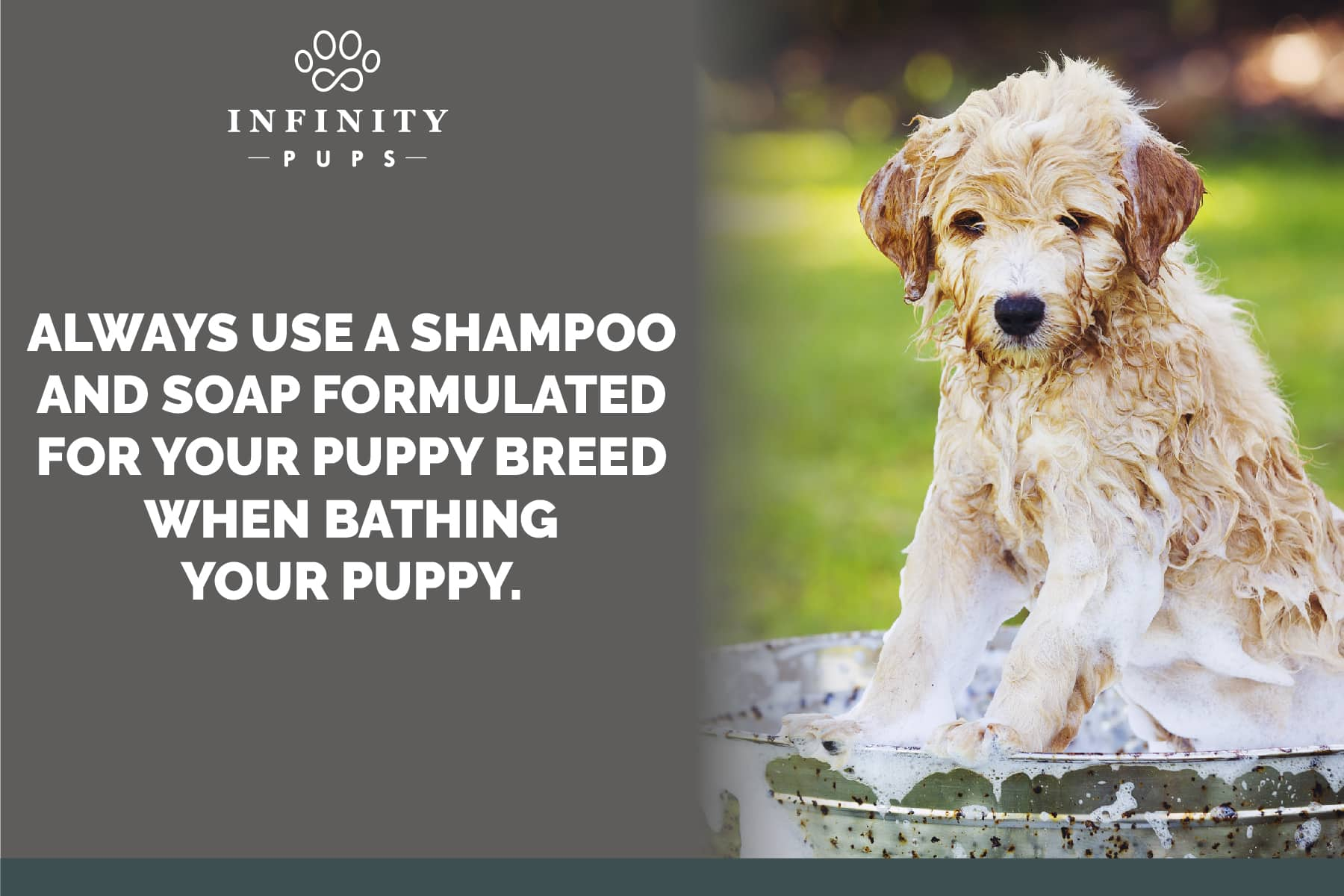 use a shampoo formulated for puppies and dogs