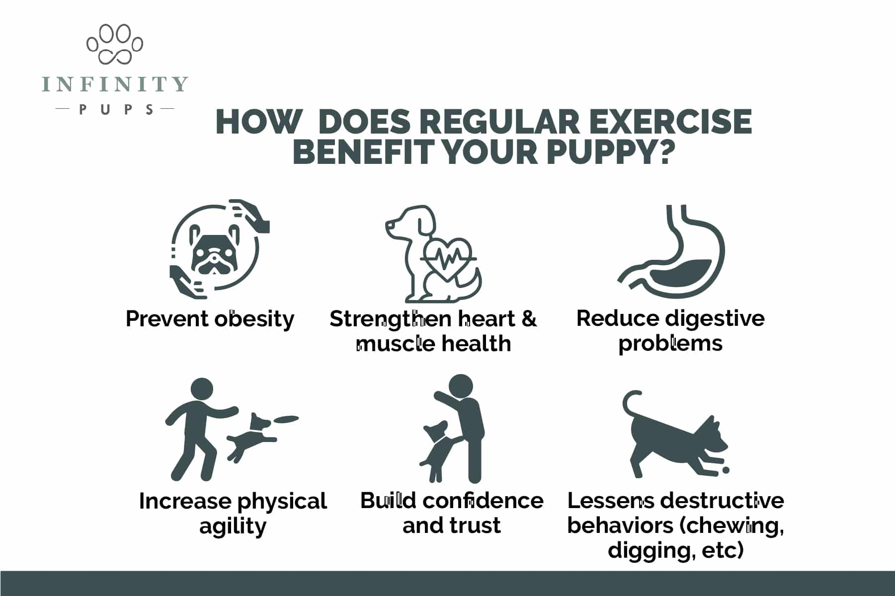6 ways regular exercise benefits your puppy