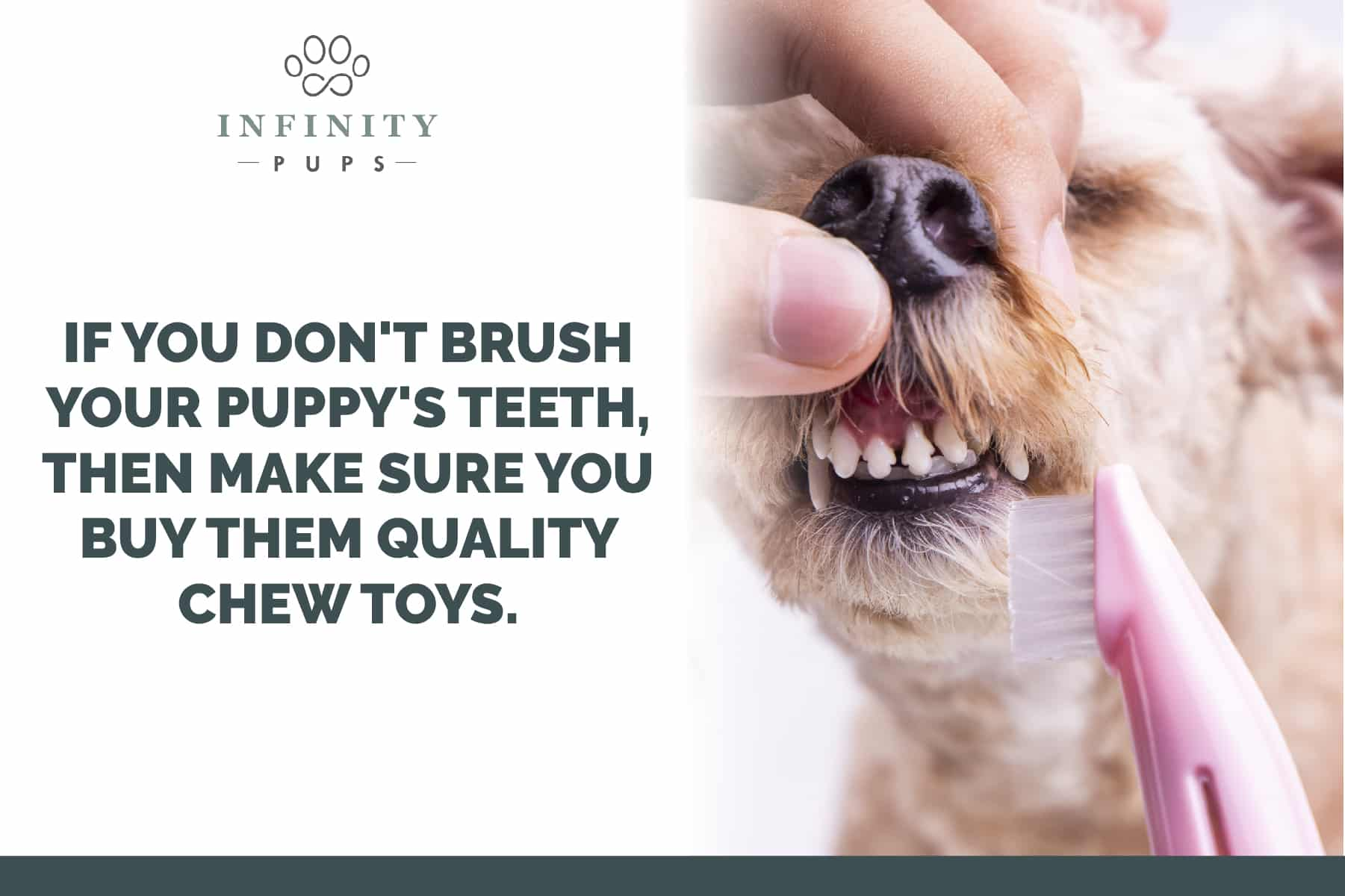 buy quality chew toys to help your puppy's teeth