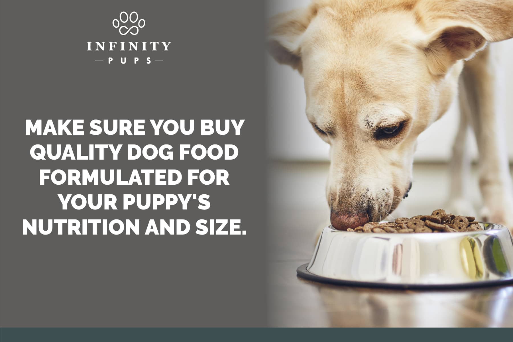 always buy quality dog food for your puppy