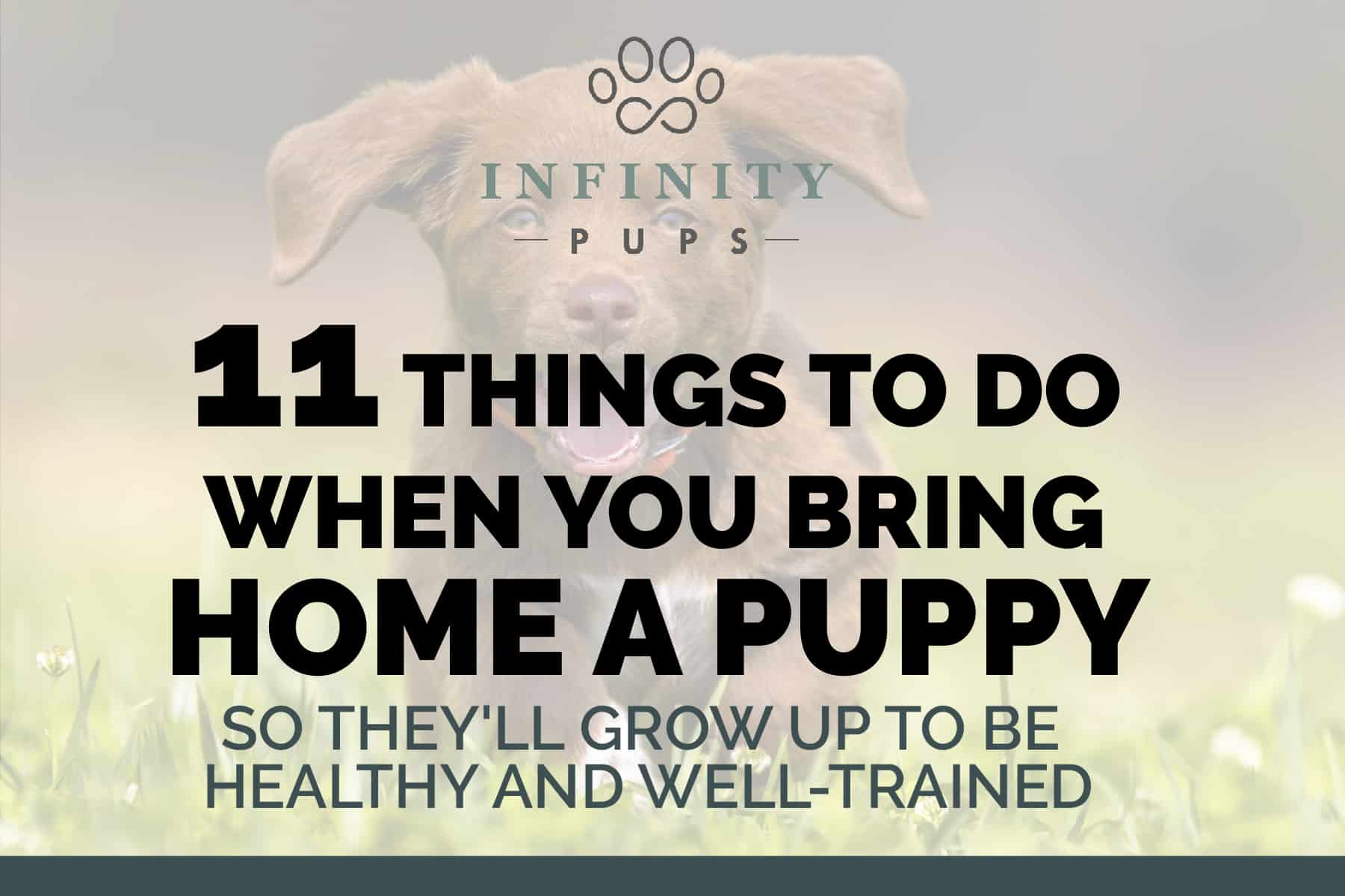 11 Things To Do When You Bring Home A Puppy (so they'll be healthy & well-trained) 1