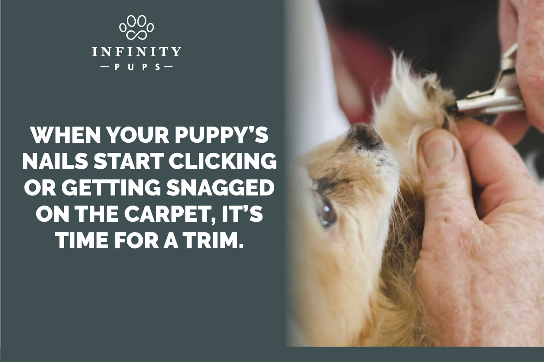 trim your puppy's nails when they start clicking on the floor
