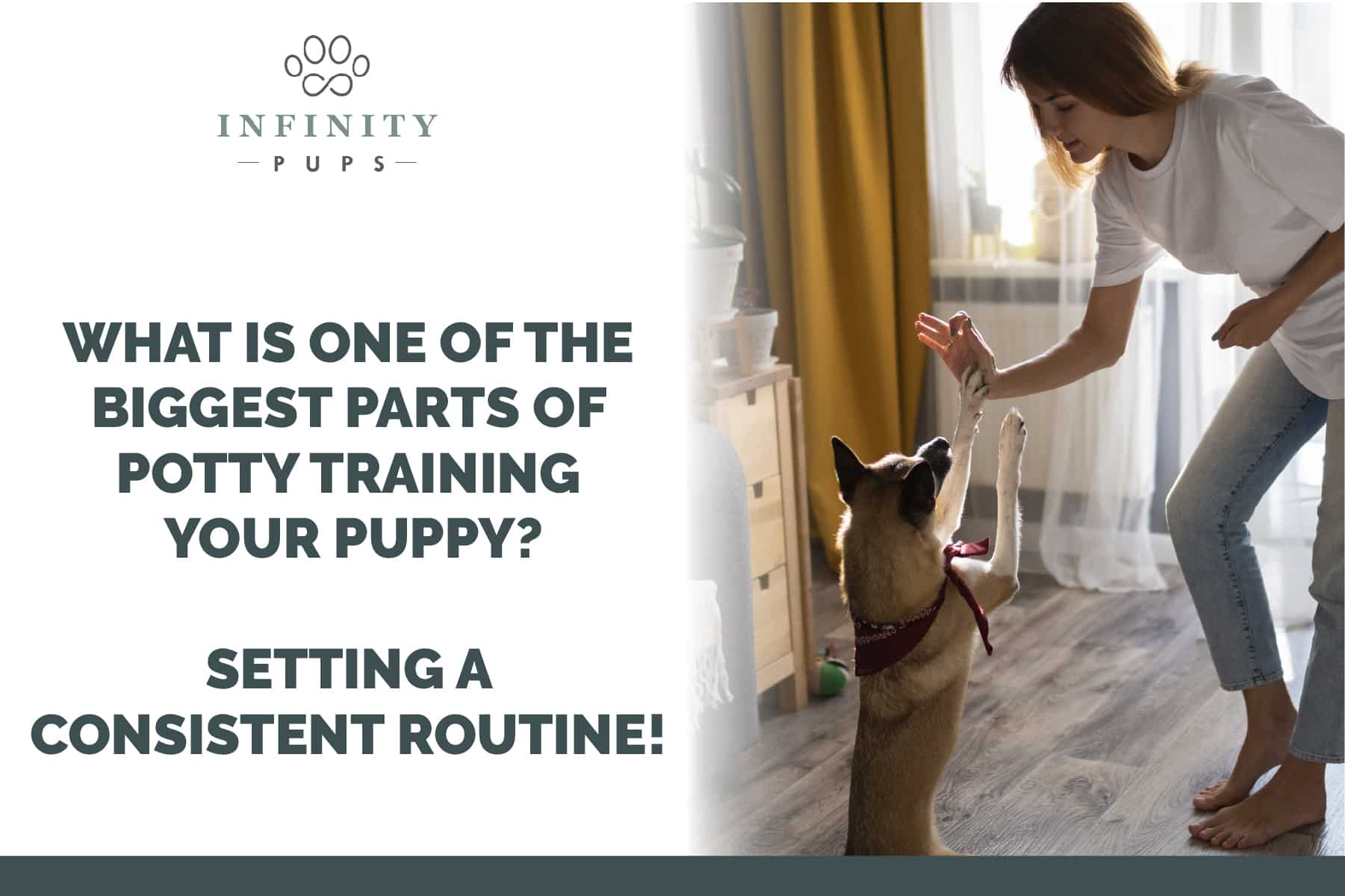 setting a routine is critical for potty training your puppy
