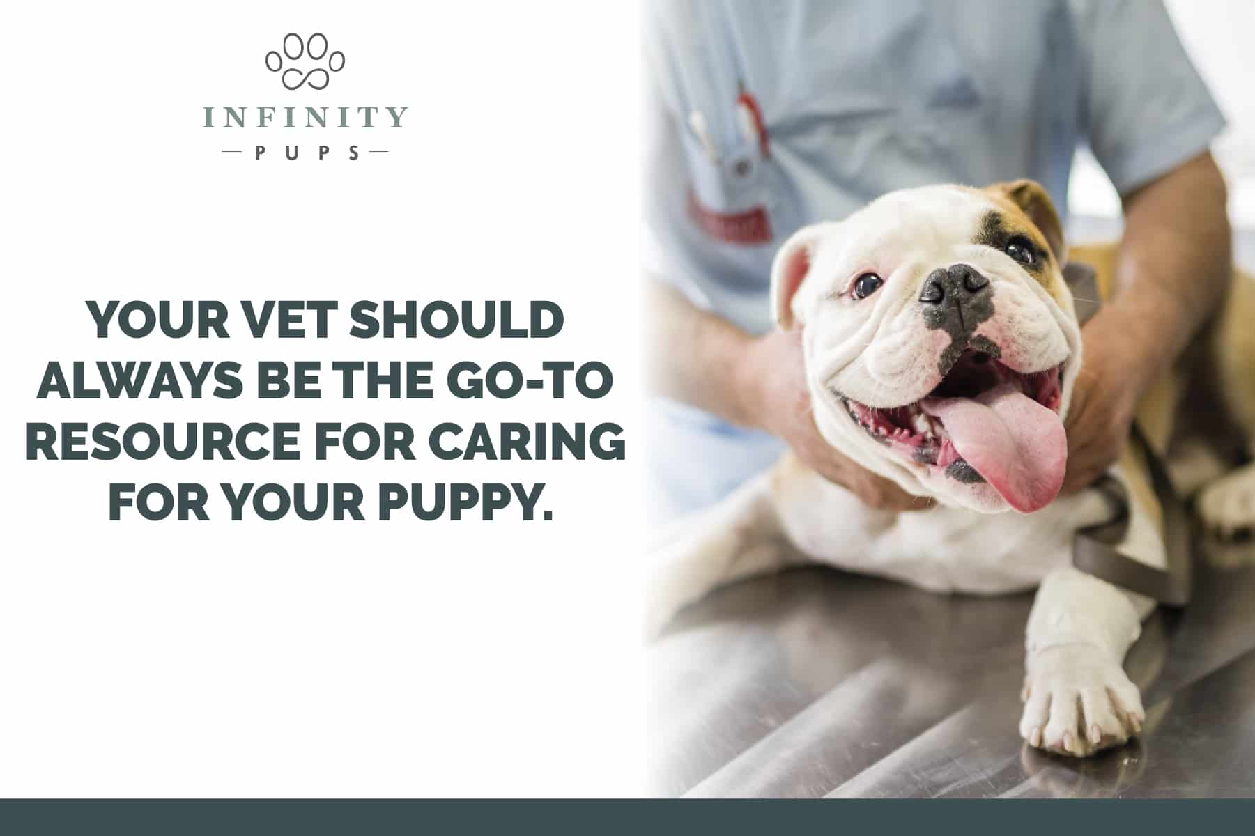 your vet is the best source for caring for your puppy