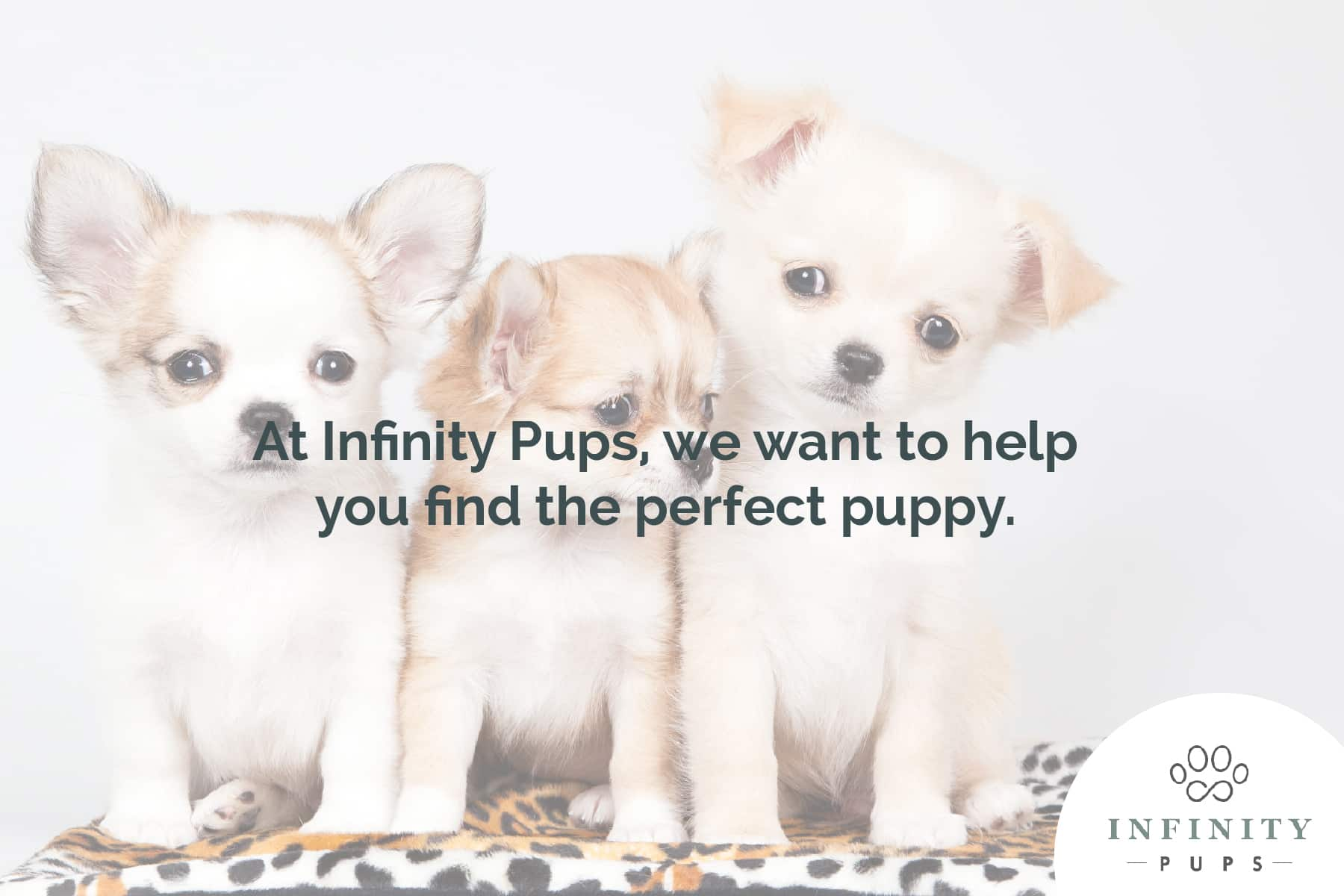 find the perfect puppy