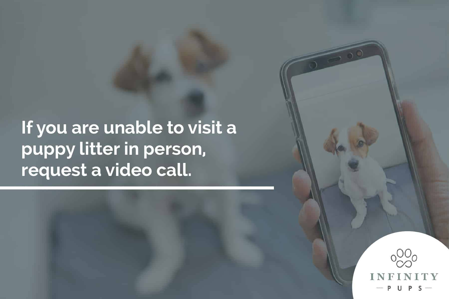 request a video call before buying a puppy