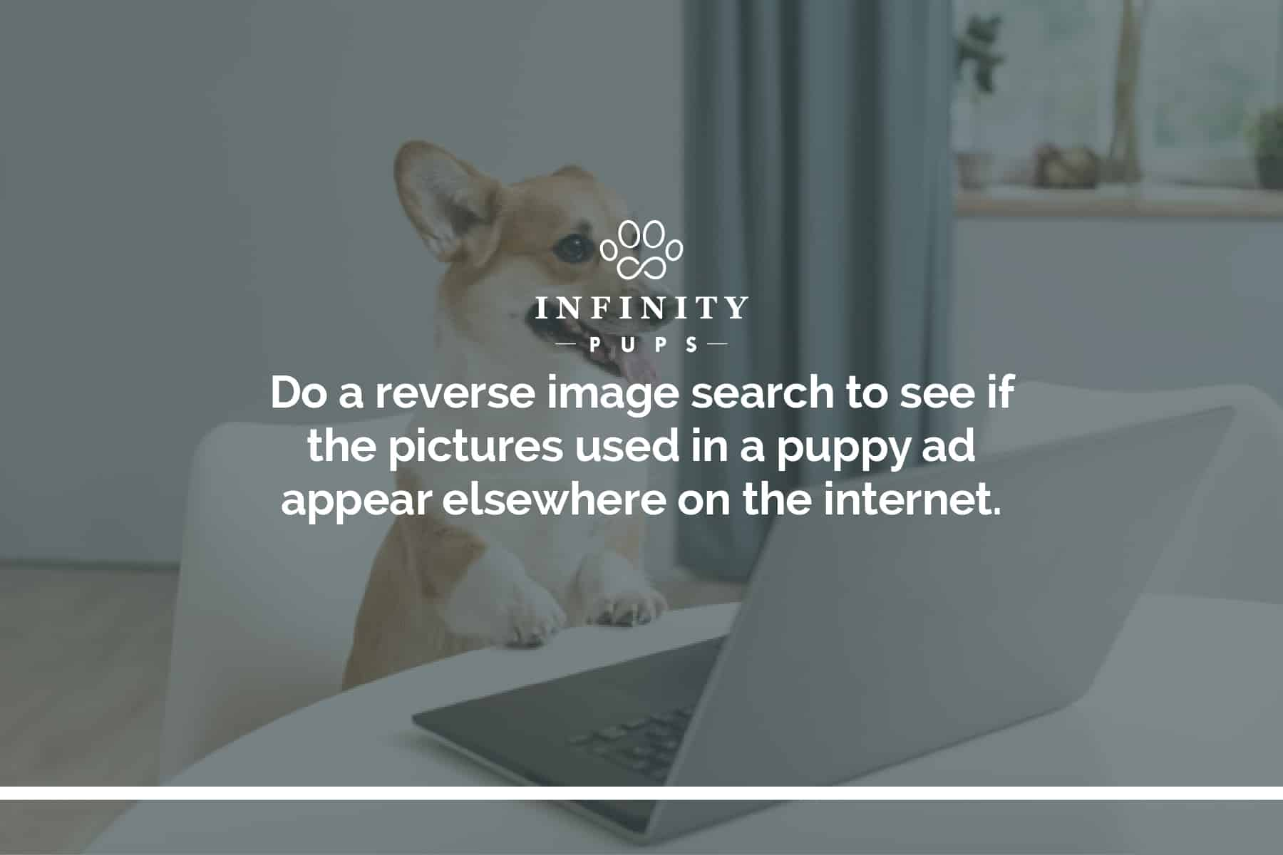 reverse image search puppy pictures