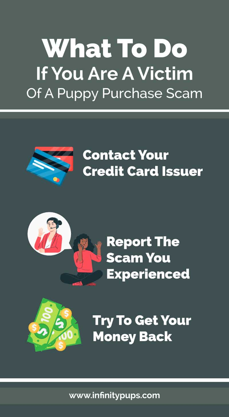 what to do if you a victim of a puppy sale scam