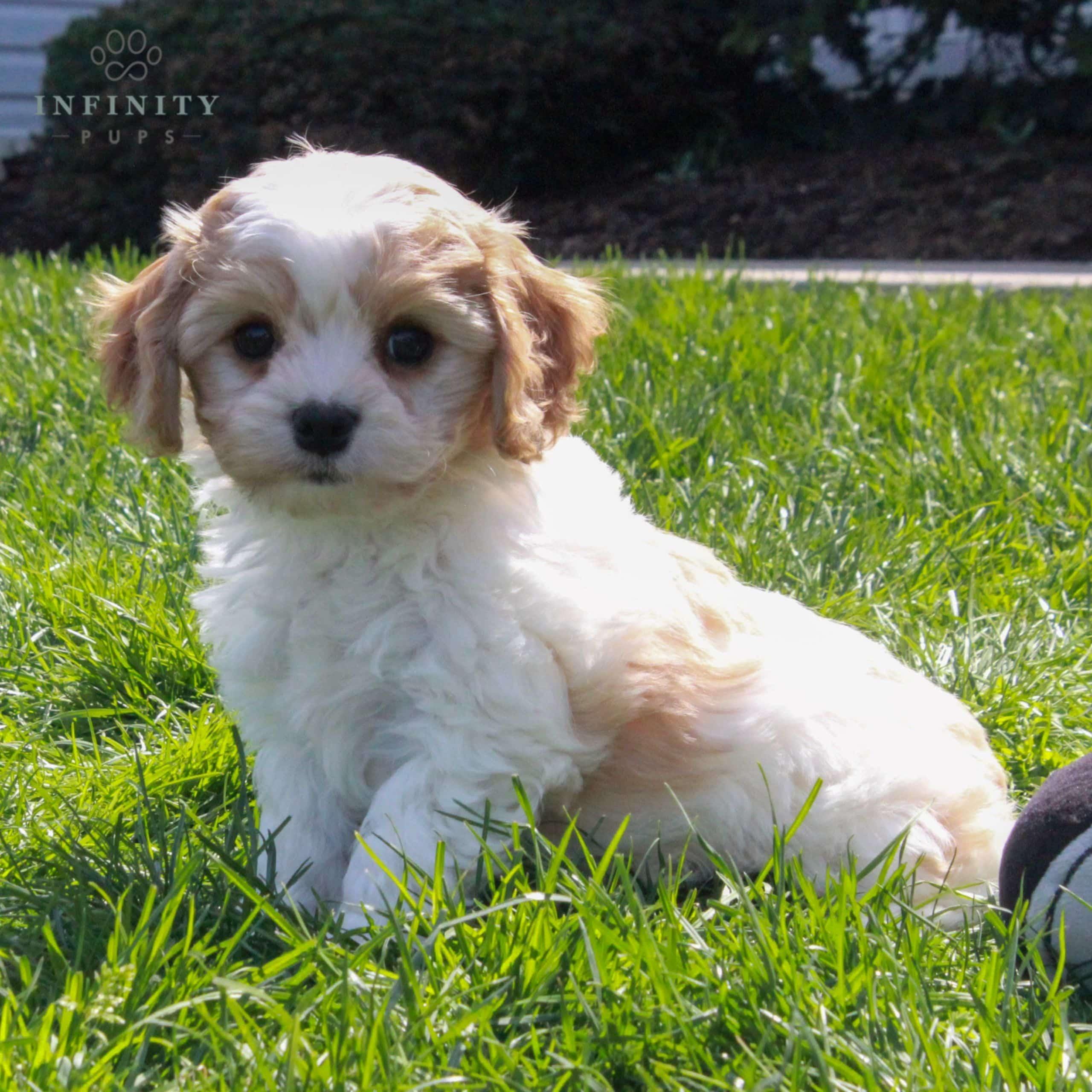 Winnie-Female (14)
