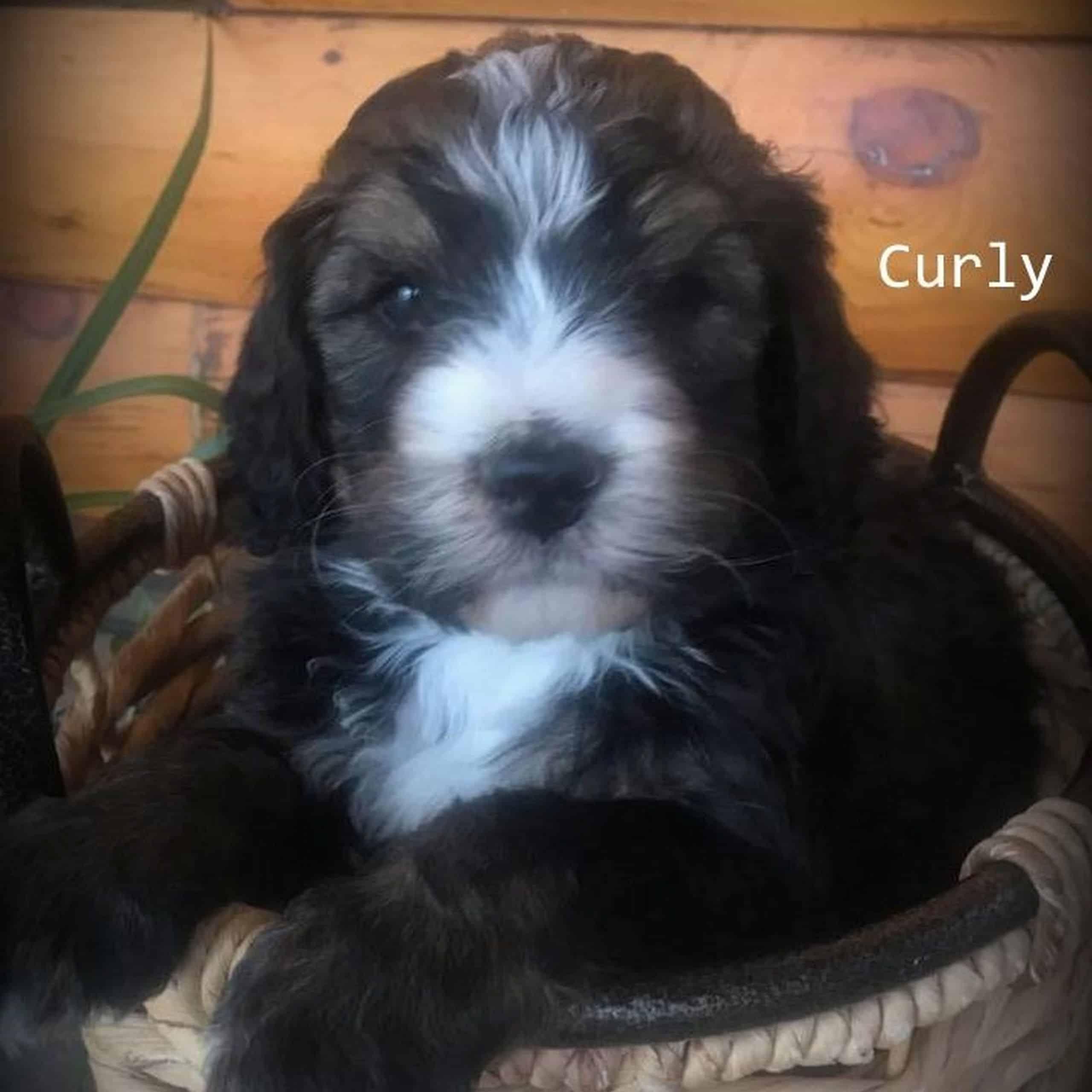 Curly – M