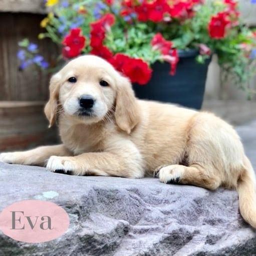 Eva - ACA 1