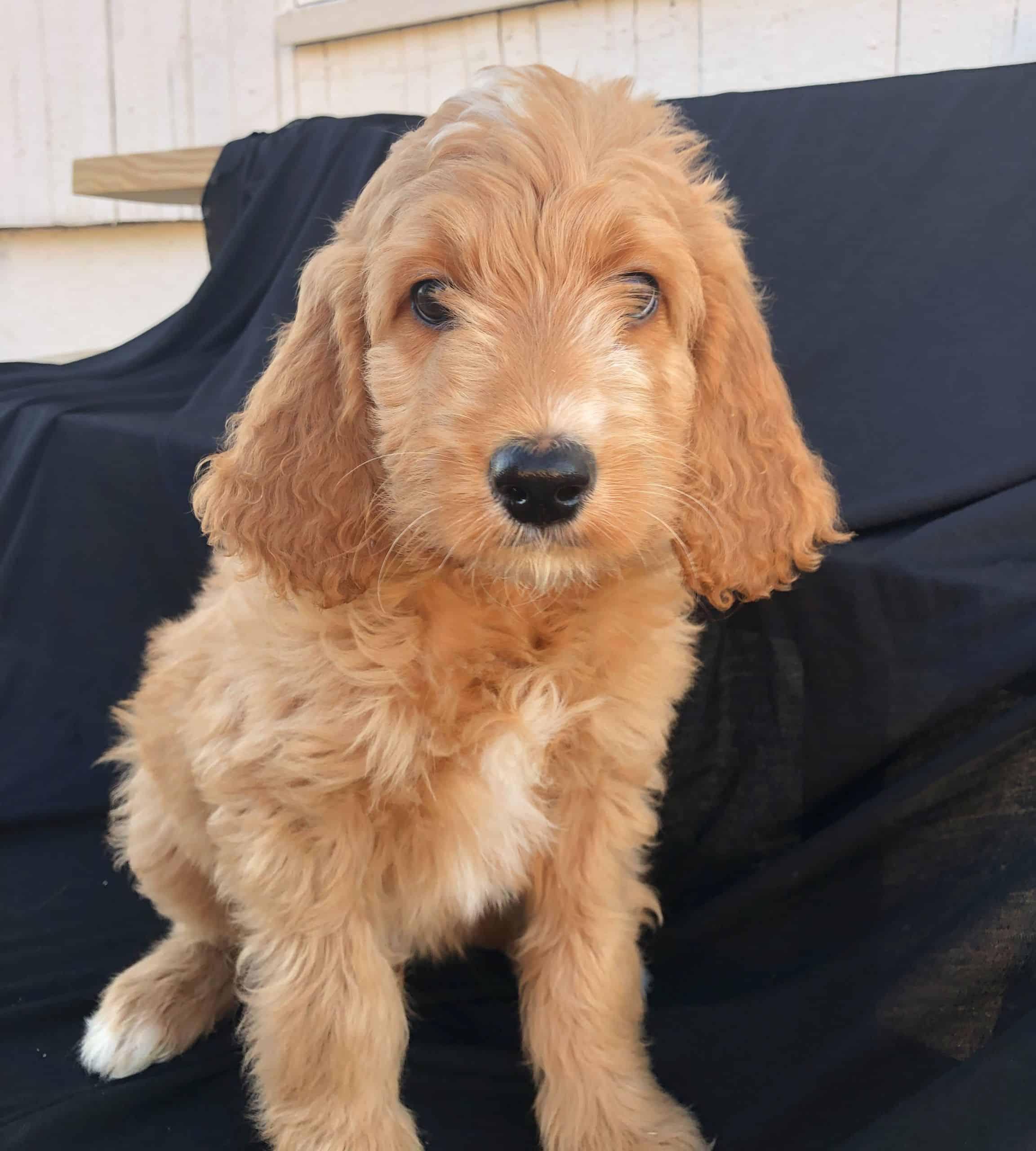 Brody-m (1)